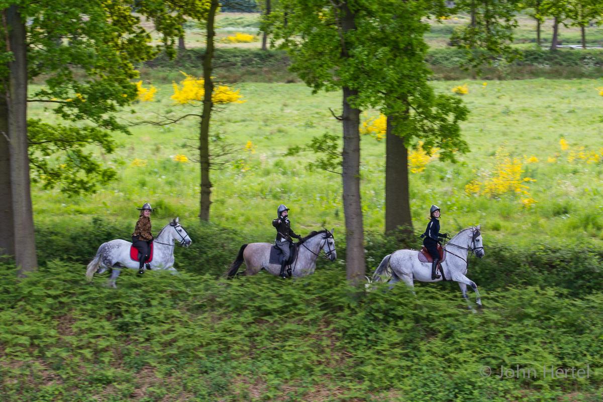 Cavalerie_Concours_Halsteren-2